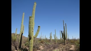2017 05 11-12 - Pustynia Sonora i kaktusy saguaro