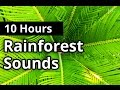 Download Rainforest Sounds 10 HOURS - Natural Sleep Sounds - Relaxation - Meditation MP3 song and Music Video