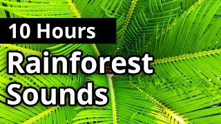 Rainforest Sounds 10 HOURS - Natural Sleep Sounds - Relaxation - Meditation
