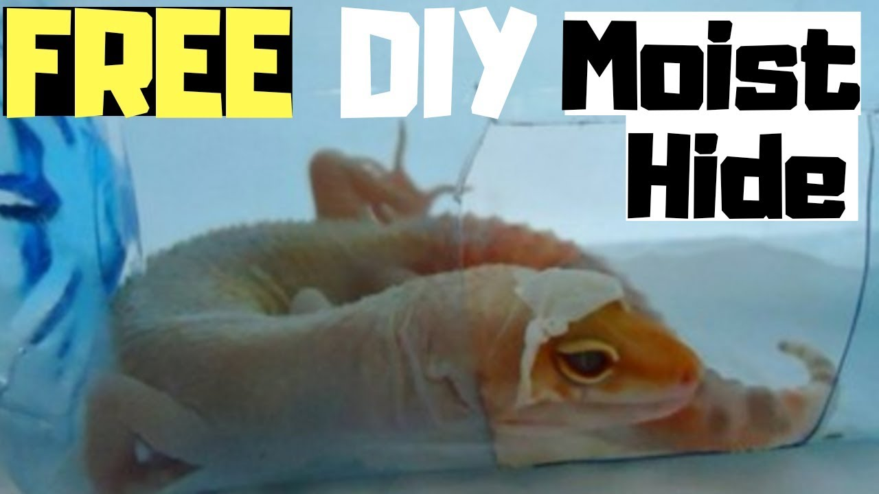 How To Make A FREE Moist Hide For Leopard Geckos