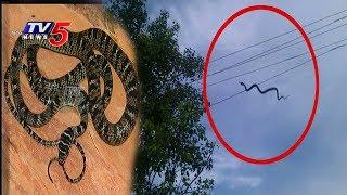 హైదరాబాద్లో 'ఫ్లయింగ్ స్నేక్' | flying snake spotted in hdyerabad | tv5 news