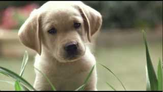 Quill: The Life Of A Guide Dog - Official Trailer
