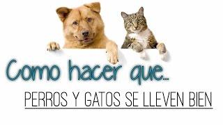 Como Hacer que Perros y Gatos se Lleven Bien