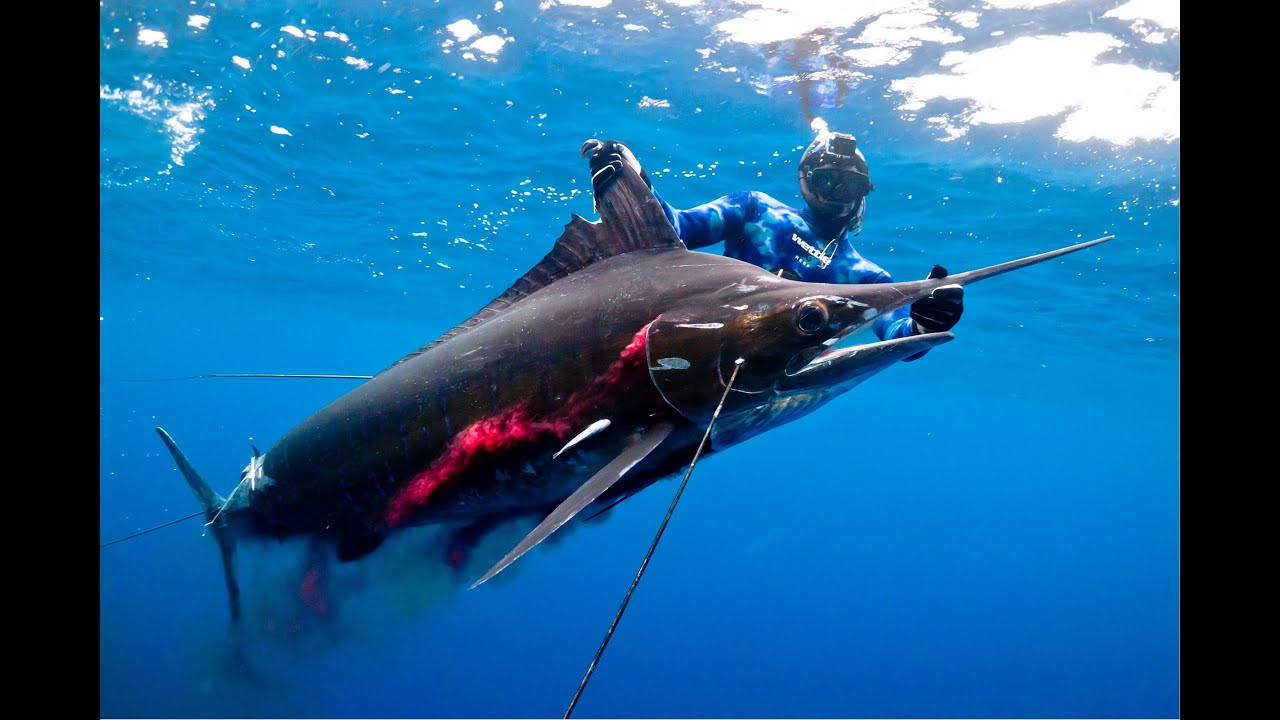 NEW WORLD RECORD! Spearfishing Striped Marlin - YouTube