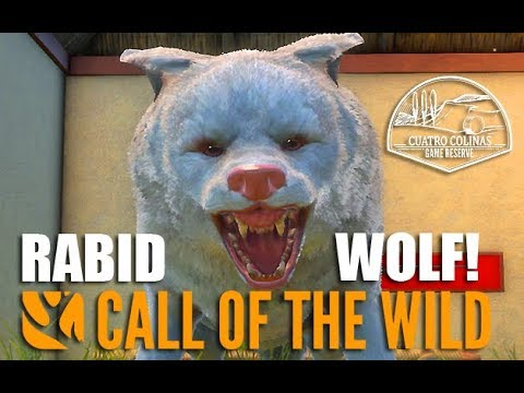Rabid Wolf ! Cuatro Colinas - The Hunter Call Of The Wild