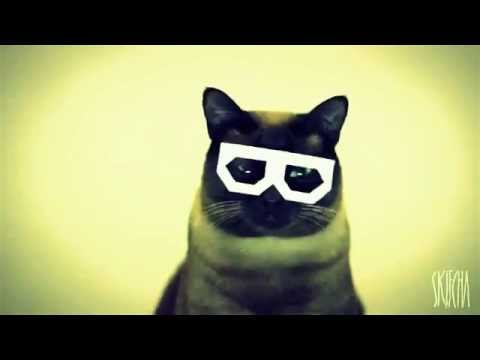 Дабстеп кота