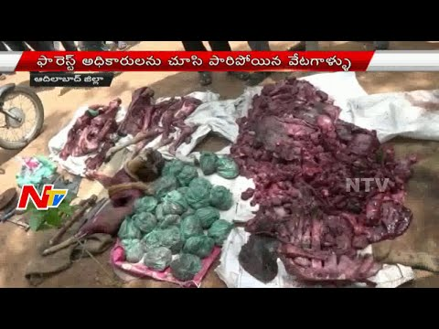 Wild Animals Hunting In Adilabad District | Hunters Escaped | NTV