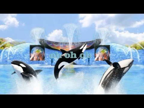 one song letra-shamu-orca show sea world-one ocean