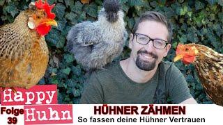 Happy Huhn Folge 39: Hühner zähmen Tipps und Tricks - wie mache ich ein Huhn zahm und zutraulich
