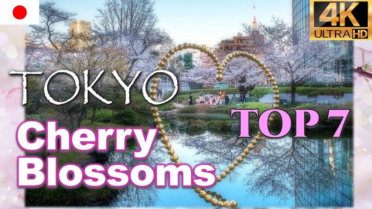 東京桜花見名所7選🌸Top 7 Tokyo Cherry Blossoms|六本木ミッドタウン ヒルズ 上野公園 千鳥ヶ淵 靖国神社 日比谷 Ueno Roppongi【4K UHD】
