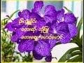 Bo Phyu ၏ မိုးလံုးမိႈင္း