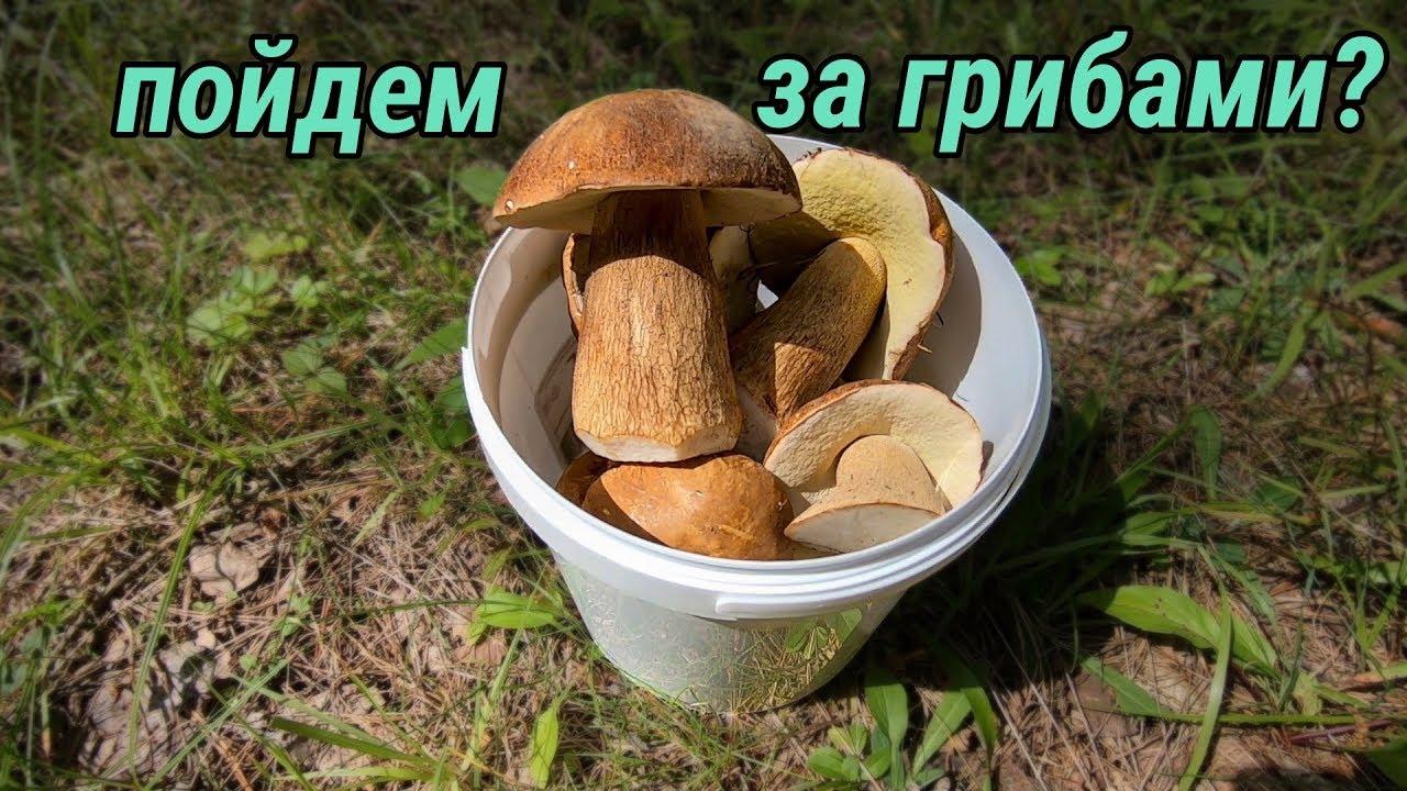 Пыра 1августа, грибы в лесу - YouTube