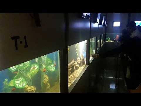 Taraporewala Aquariums Mumbai MAHARASHTRA | Biggest Aquarium Tunnel INDIA AQUARIUM Decoration ideas