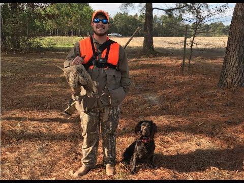 Pheasant Hunt! Boykin Spaniel On His First Retrieve!