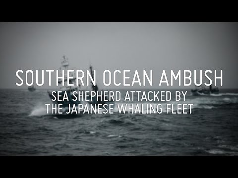 Southern Ocean Ambush - Sea Shepherd Attacked by Japanese Whaling Fleet