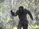 Ryan Wismer's Bigfoot Comedy Trailer