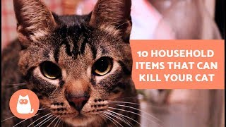 10 Household Items that can Kill your Cat