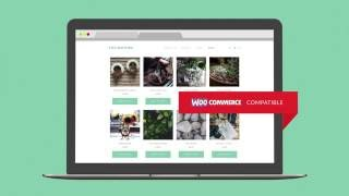 #1 Free Video Blogging WordPress Theme | TheMotion