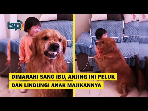 [ENG SUB] This Dog Hugged and Protected This Child when he was Being Scolded by his Mother