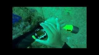 Scuba Dive Training (Inchcape 1 Wreck)