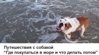 Купаемся в море (Болгария, Бургас) | Английский Бульдог - что делать после купания