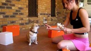 Smart Dog Trick Training - How To Train A Dog To Search