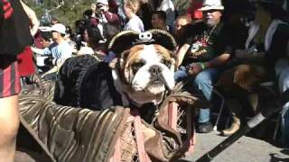 Automatic water Bowl at the Halloween Dog Parade, 600 Dogs in Costume!