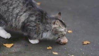 Кот тащит котлету