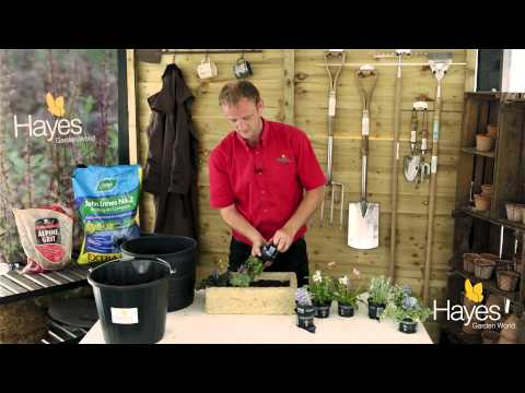 How to Plant An Alpine Trough | Hayes Garden World