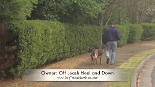 Private Dog Training Seminar In John's Creek, Georgia: Dog Trainer Seminars, Dog Training Seminars