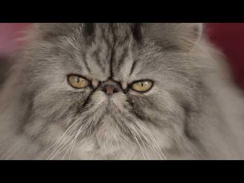 Royal Canin - Persian - Feline Breed Nutrition