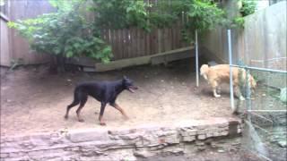 Mellow Vibes Dog Training - Ace's Training