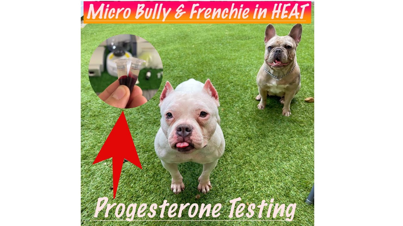 TWO Females in HEAT ➕ How To Do A PROGESTERONE TEST💉💯