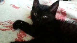 Черный котенок милаха