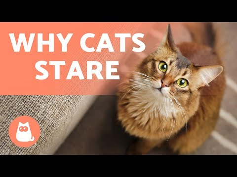 Why Do CATS STARE At US? 🙀 5 Reasons