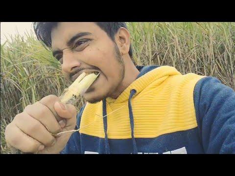 Pvr Parv Uploaded |  बिन मोसम बरसात⛈️⛈️हरे हरे खेत पीले पीले फूल