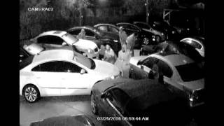 Tampa Police Investigating Group of Brazen Auto Theft Suspects