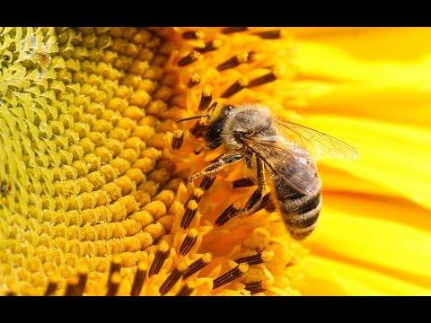 Как защитить себя от ужаления пчелами? Пчелы не любят...