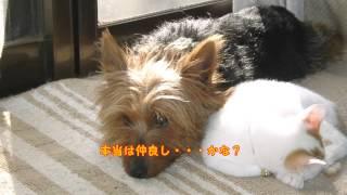 我が家の愛犬 ラフの(2003~2004)の写真をまとめてみました。 家人には...