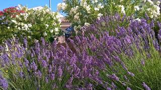 Summer sounds - Summer feeling in Provence to sleep