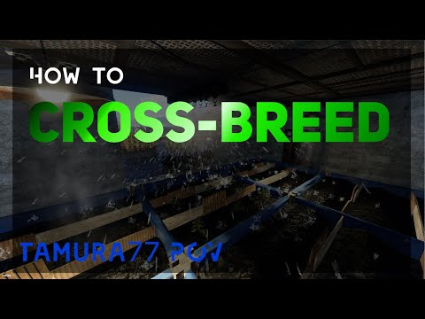 How to Crossbreed my POV   Rust