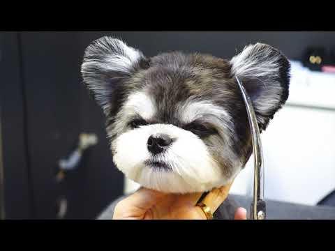 (슈앤트리) 강아지 반려견 가위컷 스포팅 미용 / pet dog grooming