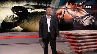 АПТАП / Шекара асқан төрт түлік / 14. 01. 2018 күнгі шығарылым