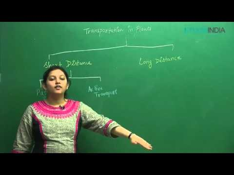 Transportation In Plants by Shivani Bhargava (SB) Mam (ETOOSINDIA.COM)