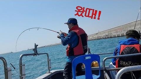 동해안 선상낚시 - 대전갱이 고등어 성대 열기