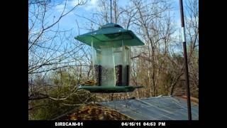 Virginia Wild Birds - A Day At The Feeder