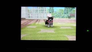 Nintendogs + Cats Toy Poodle en New Friends 3DS - Gameplay