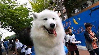 大阪大学豊中キャンパスで開催されたいちょう祭に行ったよ✨たのしいステ...