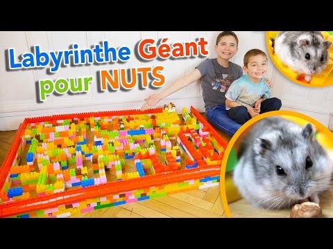 LABYRINTHE GÉANT EN LEGO POUR NOTRE HAMSTER 🐹