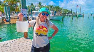 Feeding Tarpon in the Florida Keys! Islamorada & Key Largo Day Trip from Miami, FL